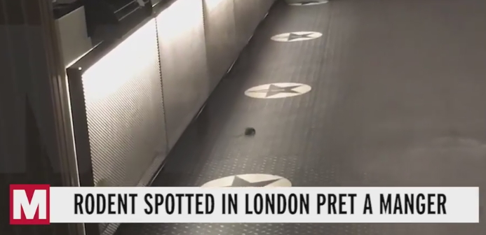2019-11-07 Mice filmed in Pret TrafSq